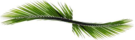 Paysagiste dr me ard che paysages prestige creations for Feuille de palmier deco