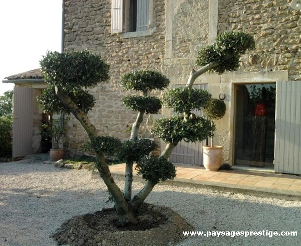 Paysagiste dr me ard che paysages prestige creations de jardins th mes - Jardin taille olivier ...